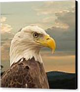 American Bald Eagle With Peircing Eyes Canvas Print by Douglas Barnett