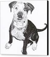 American Bull Dog As A Pup Canvas Print