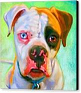 American Bulldog Art Canvas Print by Iain McDonald