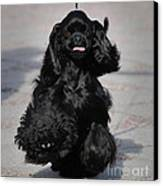 American Cocker Spaniel In Action Canvas Print by Camilla Brattemark