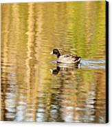 American Coot Canvas Print by Scott Pellegrin