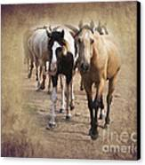 American Quarter Horse Herd Canvas Print by Betty LaRue