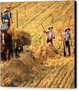 Amish Boys Wheat Harvest  Canvas Print