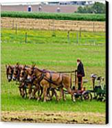 Amish Farmer Canvas Print by Guy Whiteley