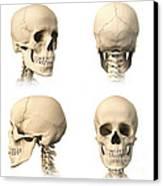 Anatomy Of Human Skull From Different Canvas Print by Leonello Calvetti