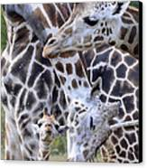 And Baby Makes Three Canvas Print by Lori Tambakis