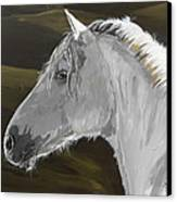 Andalusian Foal Canvas Print