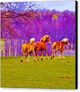 Andy's Horses Canvas Print by BandC  Photography