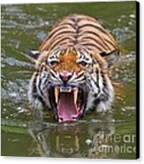 Angry Tiger Canvas Print by Louise Heusinkveld