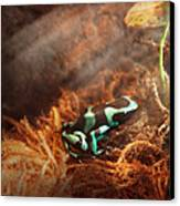 Animal - Frog - Lick The Green Frog Canvas Print