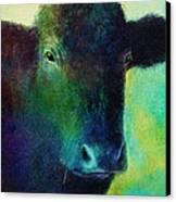 animals - cows- Black Cow Canvas Print