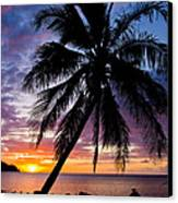 Anini Palm Canvas Print by Adam Pender