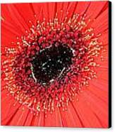 Ant That A Daisy Canvas Print by Sarah E Kohara