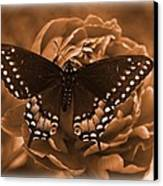 Antique Butterfly Canvas Print by Diane Reed