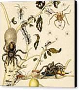 Ants Spiders Tarantula And Hummingbird Canvas Print