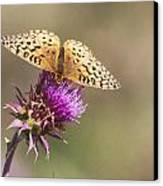 Aphrodite Butterfly On A Purple Thistle Canvas Print