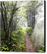 Appalachian Trail Canvas Print by Debra and Dave Vanderlaan