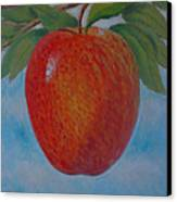 Apple 1 In A Series Of 3 Canvas Print by Don Young