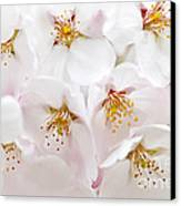 Apple Blossoms Canvas Print by Elena Elisseeva