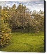 Apple Orchard Canvas Print by Amanda Elwell