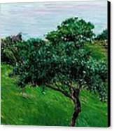 Apple Trees By The Sea Trouville Canvas Print