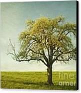 Appletree Canvas Print
