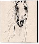 Arabian Horse Drawing 25 Canvas Print