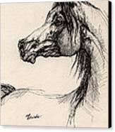 Arabian Horse Drawing 26 Canvas Print