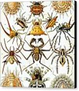 Arachnida Canvas Print by Georgia Fowler