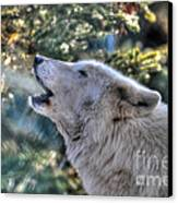 Arctic Wolf Song Canvas Print by Skye Ryan-Evans