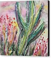 Arizona Desert Canvas Print by M C Sturman