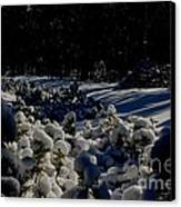 Army Of Trees Canvas Print by Tim Rice