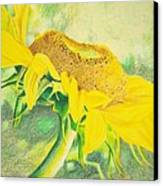 Sunflower Print Art For Sale Colored Pencil Floral Canvas Print