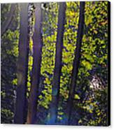 Art In The Woods Canvas Print by Donald Torgerson
