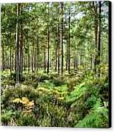 Ashley Heath Forest Canvas Print