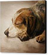 Asleep Canvas Print by Diane Kraudelt