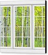 Aspen Tree Forest Autumn Time White Window View  Canvas Print by James BO  Insogna