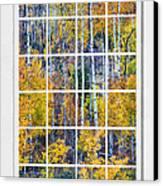 Aspen Tree Magic Cottonwood Pass White Window Portrait View Canvas Print by James BO  Insogna