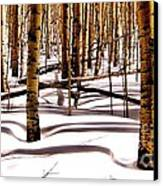 Aspens In Winter Canvas Print by Claudette Bujold-Poirier