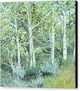 Aspens Of Medicine Bow Canvas Print by Terri Ana Stokes