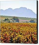 Autum Wine Field Canvas Print