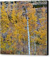 Autumn Aspens Canvas Print by James BO  Insogna
