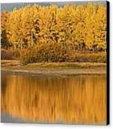 Autumn Aspens Reflected In Snake River Canvas Print by David Ponton