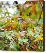 Autumn Canvas Print by Barbara Shallue
