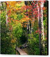 Autumn Boardwalk Canvas Print by Bill Wakeley