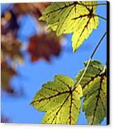 Autumn Bokeh  Canvas Print by Chris Anderson