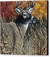 Autumn Buck Canvas Print by Kimberly Blaylock
