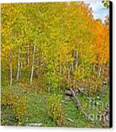 Autumn Color Canvas Print by Baywest Imaging