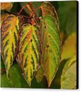 Autumn Colours Canvas Print by Jacqui Collett
