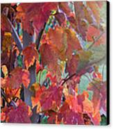 Autumn Flame Canvas Print by Dana Moyer